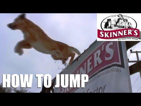Gundog training tips – Jumping