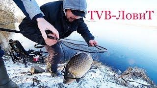 Ловля огромных Карпов и Карасей в ноябре на дикаре | Рыбалка на фидер поздней осенью 2017
