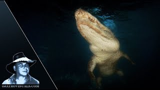 Alligators Underwater At Night Footage 01