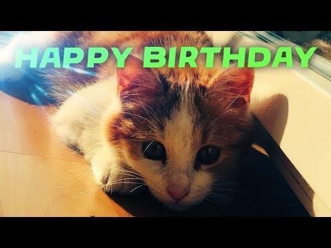 Meine Katze hat Geburtstag