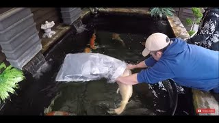 Koi Keeper Visited - Gary and Beth Parker - Part 3
