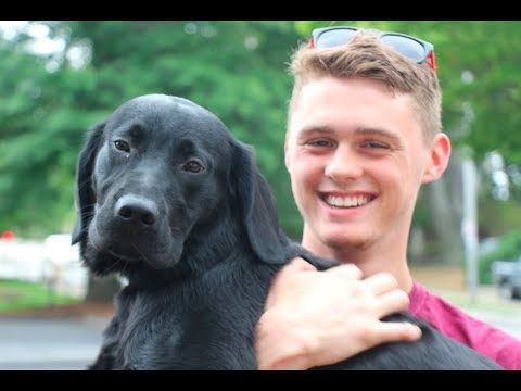 Meet Diesel, a service dog in training who lives with students at WPI