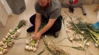 Best Garlic Braiding Easy Tutorial - How To With Steven