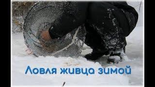 Ловля карася в морды зимой