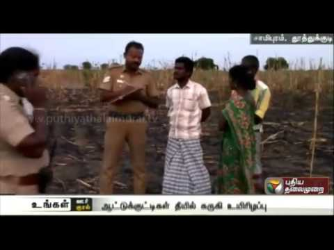 Goats-worth-rupees-three-lakhs-burnt-alive-at-Tuticorin