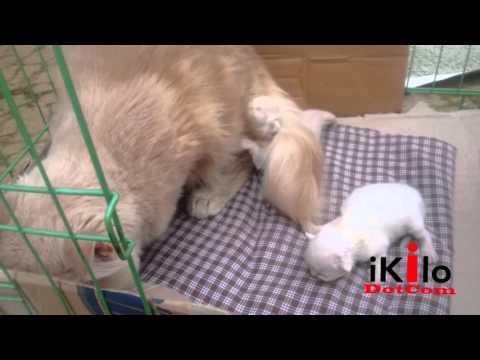 Video moly melahirkan yang kedua kalinya