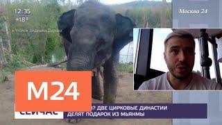 Две цирковые династии не поделили подарок из Мьянмы - Москва 24