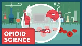 The Science of Opioids