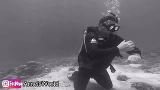 Kon Tiki Reef Dive Site, Lapu-Lapu