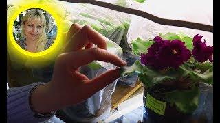 🌹🌹🌹 Лайфхак как оставить цветы на месяц отпуска
