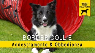 Border Collie - Addestramento & Obbedienza (L Agility Dog)