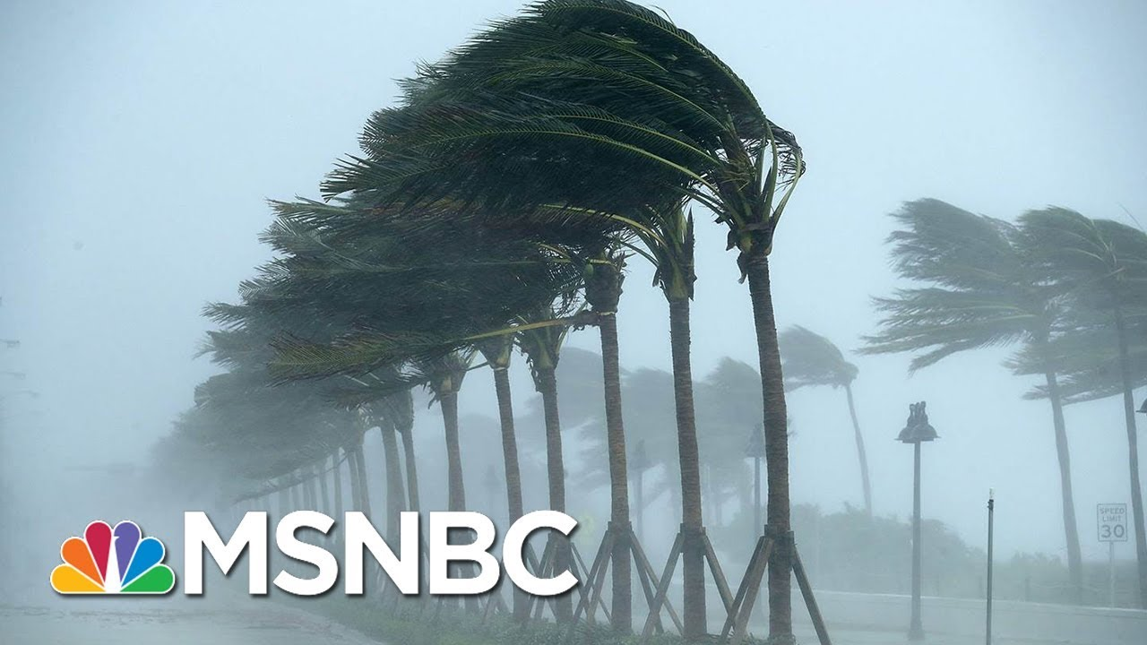 Marco Island City Council Chair Larry Honig: We Do Fear Casualties | MSNBC thumbnail