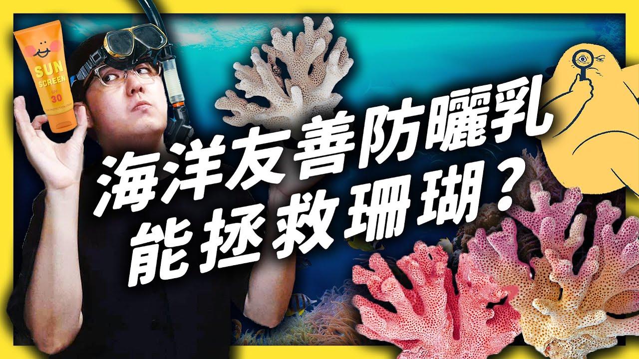 防曬乳讓珊瑚白化更嚴重?改用「海洋友善」產品能拯救珊瑚嗎?|志祺七七