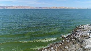 Understanding the Dangers of Blue-Green Algae (Cyanobacteria)