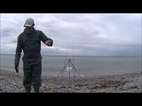 Kantvissen op Bot en mega-Schar (video)