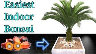 Easiest Bonsai For Beginners