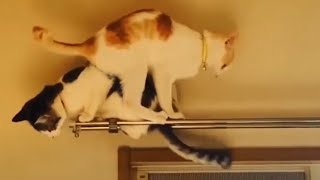 CATS Will Make You LAUGH YOUR HEAD OFF - Funny CAT Fails Compilation [Funny Pets]