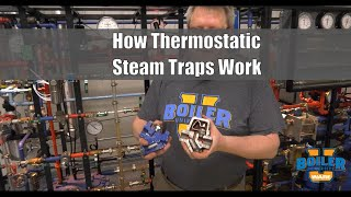 Steam Traps | How Thermostatic Steam Traps Work and Uses