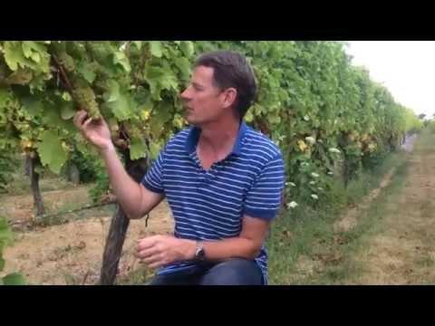 Proef de Twin Islands Sauvignon Blanc samen met Clive Jones