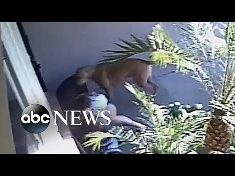 Mom, Son Attacked by Dogs