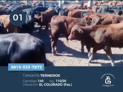 Machos - El Colorado Fsa