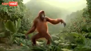 Dancing Monkey Cause Its Friday!