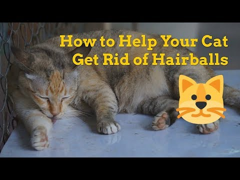 How to Help Your Cat Get Rid of Hairballs - Hairball Removal - YouTube - YouTube