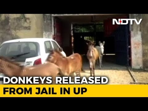 8 donkeys jailed for 4 days after they were found guilty of destroying expensive plants