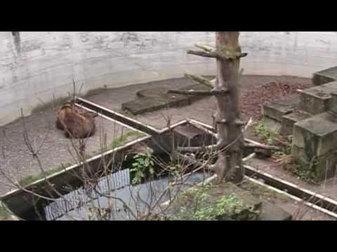 Nieuwe berenpark