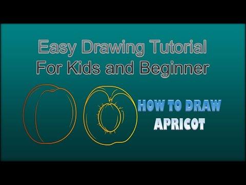 Belajar Menggambar Buah Aprikot