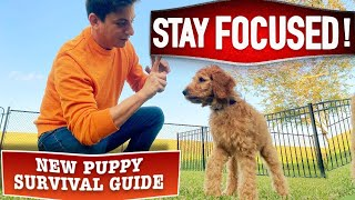 Prepare ANY Canine To Hear Round ANY Distraction! (New Pet Survival Information EP. 19)  Latest Pet News & Insurance Deals mqdefault