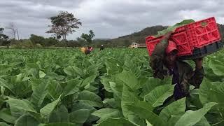 Check our little movie from Esteli in Nicaragua (AJ Fernandez)