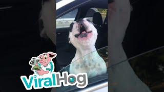 Opera Singing Dog || ViralHog