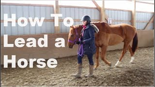 How To Lead a Horse