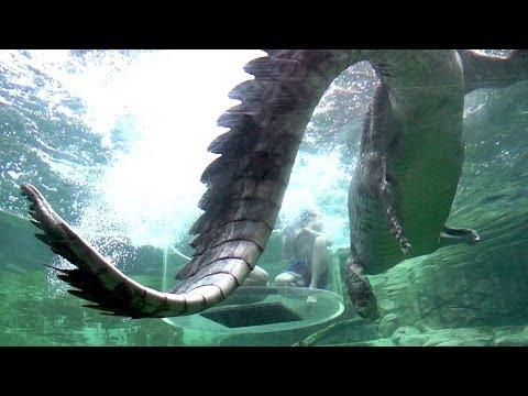 You've Never Seen Crocodiles Like This. Wow.