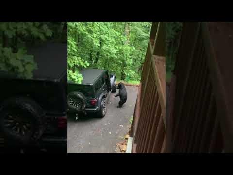 Αρκούδα επιχείρησε να μπει σε αμάξι