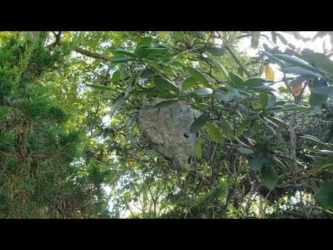 Finding a Bald-Faced Hornets Nest During An Inspection in Tinton Falls, NJ
