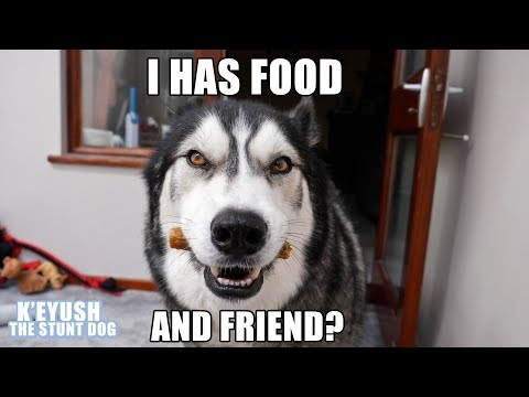 Husky Drops FOOD In SHOCK Finding Out His BEST FRIEND Is Visiting!