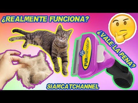 Furminator ¿Realmente Funciona? ¿Vale La Pena? - Cepillo Deslanador Para Gatos -SiamCatChannel
