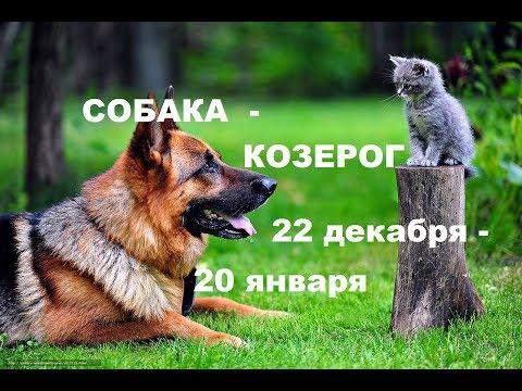 собака - КОЗЕРОГ. ТАЛИСМАН для практичных и организованных .