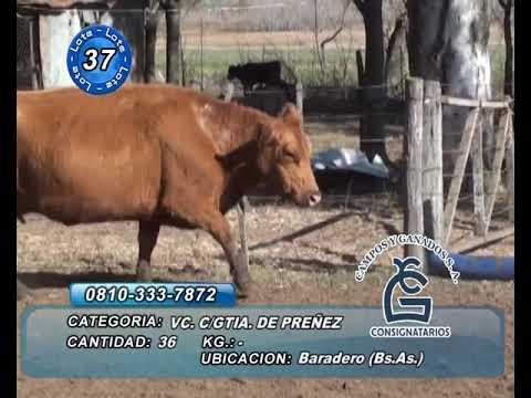Lote vaca CGP - Baradero