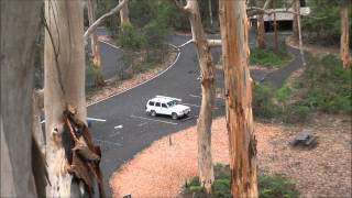 The Gloucester Tree - I Vest Australien