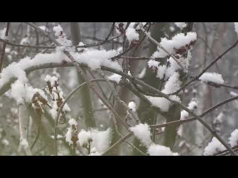 Стих про зиму и Новый год для детей