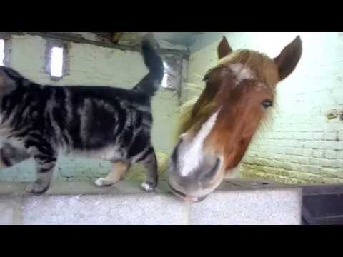 Cat and horse are best friends, and like to snuggle / Boing Boing