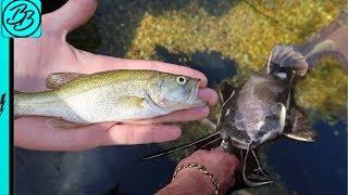 My Redtail Catfish ATE My Pet Bass!!