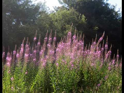 Ziedu putekšņu ārstēšana prostatīta