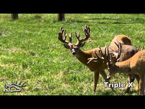 Triple X Youtube.mp4