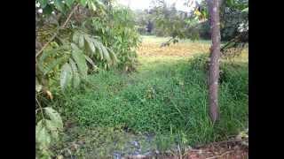 preview picture of video 'Kampung Bukit Nambua..'