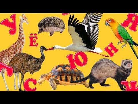 Учим буквы Мохнатая азбука