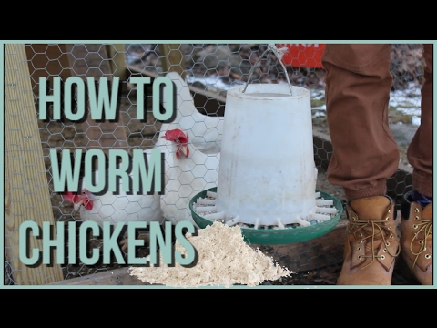 Deworming cat worms